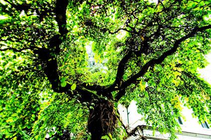 VAG tree