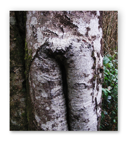tree vee