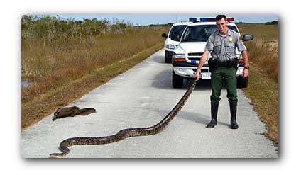 20070729_python.jpg