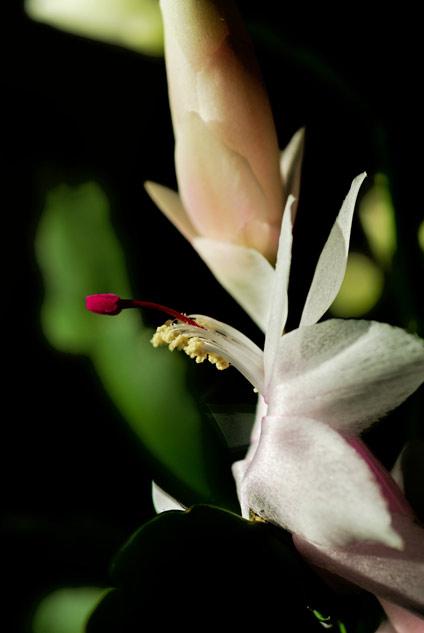 20071113_flower.jpg