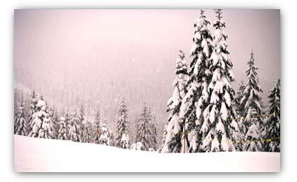 20071227_cypress_snow.jpg
