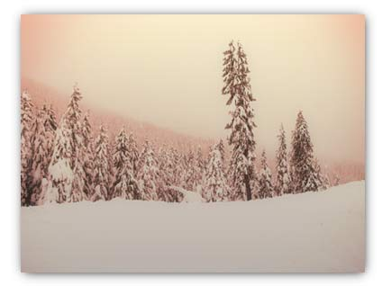 20071228_cypress_trees.jpg