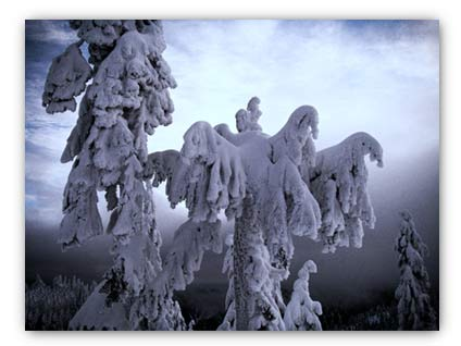 20071229_treetops.jpg