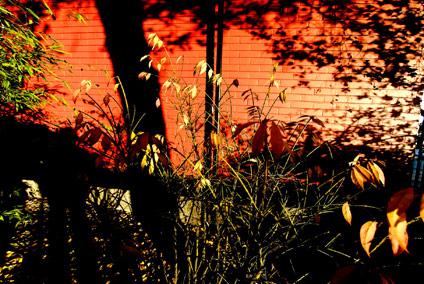 bamboo-contrast.jpg