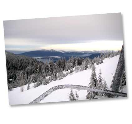 20061226-cypress.jpg