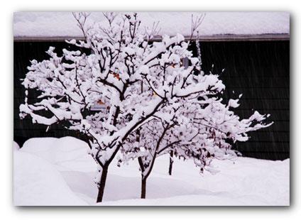 20090103_tree-sm