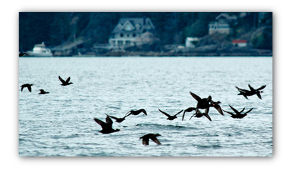 20090419_ducks-sm
